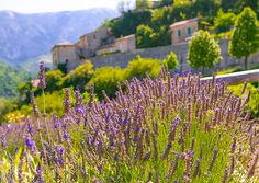 Travel spotlight: Provence, France #goaheadtours