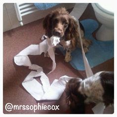 The new andrex puppies