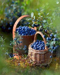 ⠀⠀⠀⠀⠀⠀⠀⠀⠀ ❁ Photo b Fruit And Veg, Fruits And Vegetables, Fresh Fruit, Blueberry Farm, Fruits Photos, Fruit Photography, Beautiful Fruits, Fruit Painting, Exotic Fruit
