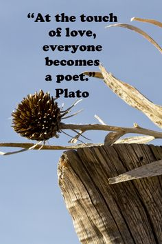 """At the touch of love, everyone becomes a poet.""  Plato  --  Explore more quotes on the sacred in life at http://www.examiner.com/article/learning-to-find-the-sacred-life"