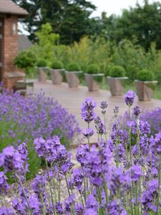 If I had a house, I'd line the path to the door with lavender. Good-smelling guests guaranteed!