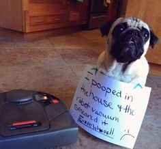 Roomba Role Over Dog's Poop...Dad Wakes Up To Find ...