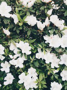 Spring blooms//