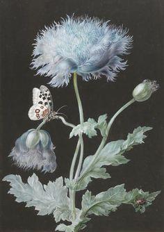 Barbara Regina Dietzsch (1706-1783) - потомственный художник, одна из семерых детей немецкого рисовальщика и гравера Johann Israel Dietzsch, обучавшихся в мастерской своего отца.