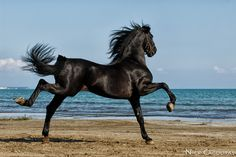 Achilles by Nick Cagouras on 500px