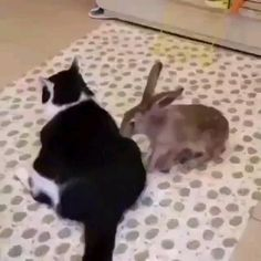Cute Little Animals, Cute Funny Animals, Animals For Kids, Animals And Pets, Cute Cats, Funny Bunnies, Funny Cats, Beautiful Cats, Animals Beautiful