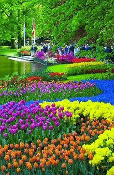 The Colours of Keukenhof Gardens, Netherlands