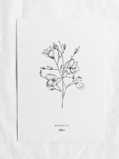 Bring spring into your home with this botanic illustratie of a magnolia branch, inkylines