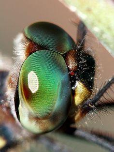 Untitled Horse Fly, Orange Leaf, Bugs, Horses, Animals, Animales, Animaux, Horse, Animal