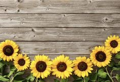 Vinyl Backdrop Flower Wooden Board Perfect for cake shooting, food shooting, baby shower, wedding, birthday party Sunflower Party, Sunflowers Background, Fb Cover Photos, Sunflower Wallpaper, Vinyl Backdrops, Laptop Wallpaper, Flower Backdrop, Aesthetic Wallpapers, Flowers