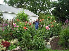 Mike and the main Dahlia Garden