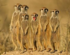 Extreme Animal Portraits: Wildlife Photographer Of The Year ...
