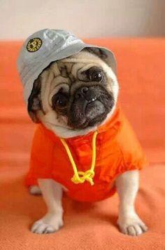 Perrito confundido jajajaa #Perro #Animal