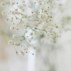 ^ white little flowers . Little Flowers, Pretty Flowers, White Flowers, Babys Breath Flowers, Photo Images, Green Photo, Shades Of White, Skyrim, Beautiful Birds