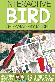 Life science and biology resources for class or homeschool. Engage students with interactive notebooks, paper dissection models, full lessons and more! Biology Lessons, Science Lessons, Life Science, Science Biology, Science Fun, Science Resources, Science Vocabulary, Teaching Science, Science Education