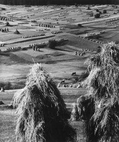 Martin Martinček, Čas žatvy, 1960/1961 Expressionist Artists, Foto Art, Rest Of The World, Plein Air, Vintage Photographs, Farm Life, Three Dimensional, Martini, Black And White
