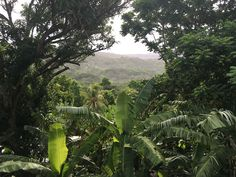 St. Mary, Jamaica Jamaica, Plant Leaves, Mary, Nature, Plants, Negril Jamaica, Flora, Plant, The Great Outdoors