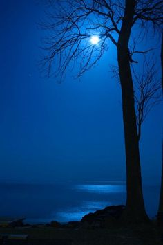 blue blue moon through bare tree Bare Tree, Tree Photography, Moonlight Photography, Beautiful Moon, All Nature, Love Blue, Color Blue, Blue Aesthetic, Blue Moon