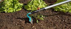 13 brilliant gardening hacks that every gardener should know Vegetable Garden, Garden Tools, Gardening Hacks, Vegetables, Home Vegetable Garden, Yard Tools, Vegetable Gardening, Vegetable Recipes, Vegetables Garden