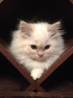 """""""I shall wait here in hiding until it's the perfect time to strike.""""   18 Kittens Who Are Destined For World Domination"""