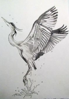 How to draw a heron step by step