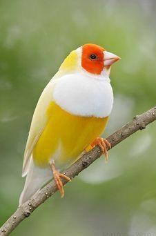 Cute Birds, Pretty Birds, Beautiful Birds, Animals Beautiful, Birds 2, Animals Amazing, Pretty Animals, Beautiful Pictures, Beautiful Rose Flowers