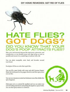 As far as possible, this post will concentrate on pest control tips that would assist keep away as much pests as you can. Some of the advises provided here will deal on specific pests but some may … Fly Repellant For Dogs, Natural Fly Repellant, Insect Repellent, Keep Flies Away, Get Rid Of Flies, Diy Pest Control, Fly Control, Flea Spray, Mint Plants