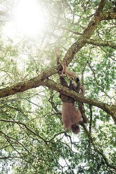 """""""Come on down, Little Monkey Boy."""" She giggles, watching her boyfriend climb around a tree above her. """"How about you come up here?"""" He smirks."""