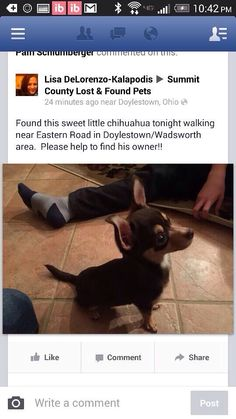 #Founddog 2-26-15 #Doylestown #OH #Chihuahua M 330-285-2346 SHARON MCCURDY LOST & FOUND OHIO PETS https://www.facebook.com/LostFoundOhioPets/posts/604383936329642