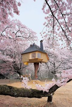 Tree House Designs - No matter whatever age you are. One look at these Amazing and Cool Tree Houses and you'll realize that you're never too old to live out your childhood dreams. Beautiful Tree Houses, Cool Tree Houses, Small Houses, Yamanashi, Petits Cottages, Real Life Fairies, Tree House Designs, Ludwig Mies Van Der Rohe, Blossom Trees