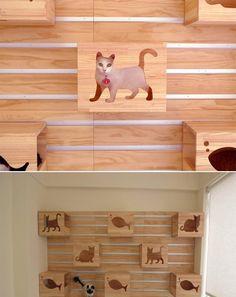 O modernário: Pra quem ama gatos!