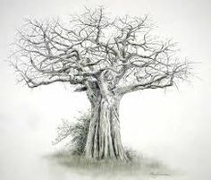 Image result for baobab tree drawing
