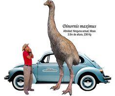 Palaeos, la historia de la Vida en la Tierra: diciembre 2010 Prehistoric World, Prehistoric Creatures, Animals Images, Animals And Pets, Great Auk, Extinct Animals, Mundo Animal, Fauna, Jurassic World