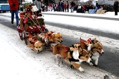 A Christmas wagon was pulled by corgis. | 35 Magical Moments Captured With A Camera