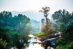 Sunset in Wayanad, India - courtesy Chris Murphy