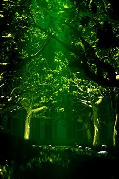 http://320x480.com/green-forest-wallpapers