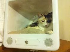 Image result for geeky cat tents tank