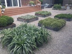 The New Backyard Cottage landscaping - planter boxes featuring succulents, grasses, cacti.