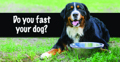 Are you fasting your dog regularly? If you aren't you may want to start. Find out why fasting your dog can help cleanse him from years of toxic build-up!