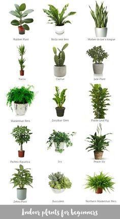 Hi there! A few days ago I collated a blog post on ways you can use plants to decorate your home. Today I thought I'd share an image I put together on some indoor plants for beginners. These would be my favourite plants and I have a few myself. The Mother-in-law's Tongue (or snake plant)...