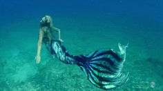 mako mermaids mermaid gifs - Google Search