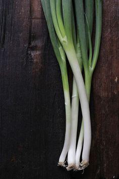 Kujo Negi, green onion from Kyoto, Japan 九条ネギ