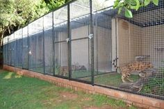 Gatil - The ideal climate in Pretoria allows for a lovely outdoor cattery.  Our cat run consist of 5 pens of 2 x 4m each. There is 4m² that is tiled and under roof where their cosy igloos are with their favourite blankets in, (yes they have their own favourites!).   Three shelves of different levels are provided for climbing and playing. Each pen has a 4m² grass area with a little flower garden to make it more natural.  They love to play hide and seek on their tree trunks and rocks.