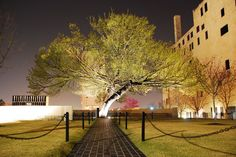Survivor Tree....an American Elm tree in the heart of downtown Oklahoma City, it survived the bomb's blast and witnessed one of the worst terrorist attacks on American soil. On 4/19/1995, the tree was almost chopped down to recover pieces of evidence that hung from its branches due to the force of the 4000 pound bomb that killed 168. When hundreds came together to write the Memorial Mission statement, one of its resolutions dictated one of the components of the Memorial must be the Survivor…