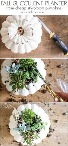 Looking for simple, easy fall decor? Try these fall succulent planters! A simple, inexpensive styrofoam core pumpkin vase makes for beautiful DIY fall decor. Click for the tutorial and tips to make them beautiful.