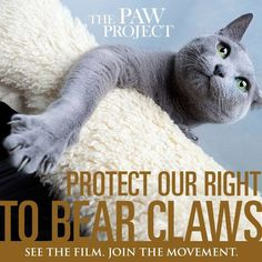 The Paw Project is being premiered in NYC this weekend! JOIN US as we join this very important movement to support the rights of all cats everywhere! Opens Friday, 9/27 6:30pm and the project's founder, Dr. Conrad, will be there for Q/A afterwards!  General admission $13, seniors $9.00.   More info here:  https://www.facebook.com/events/113735775483987/
