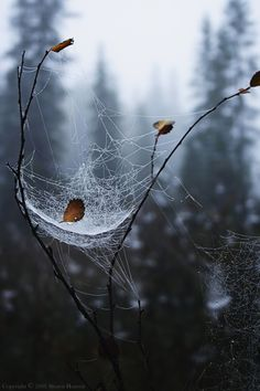 """I really tried with all my might to make my web """"out of sight""""!."""