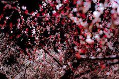 Poetic Spring Scenes in Japan by Hidenobu Suzuki | Source