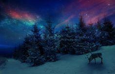 Winter ❄️ Wonderland