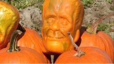 California farmer develops 'Pumpkinstein' | Fox News Video